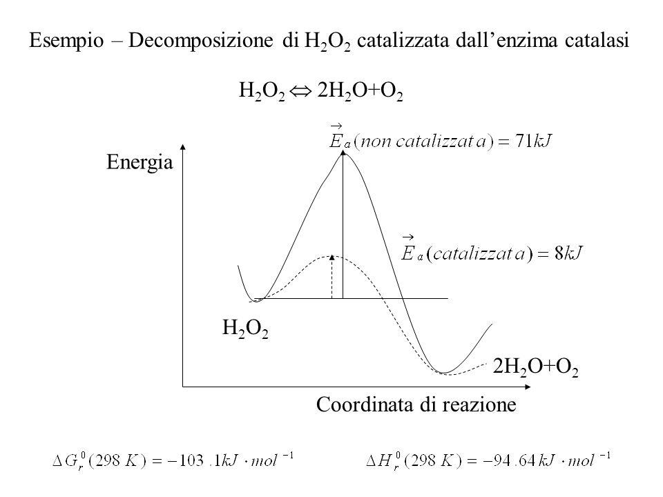 Esempio – Decomposizione di H 2 O 2 catalizzata dallenzima catalasi H 2 O 2 2H 2 O+O 2 Energia Coordinata di reazione H2O2H2O2 2H 2 O+O 2