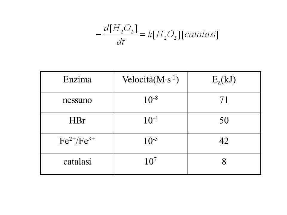 Enzima Velocità(M s -1 ) E a (kJ) nessuno10 -8 71 HBr10 -4 50 Fe 2+ /Fe 3+ 10 -3 42 catalasi10 7 8