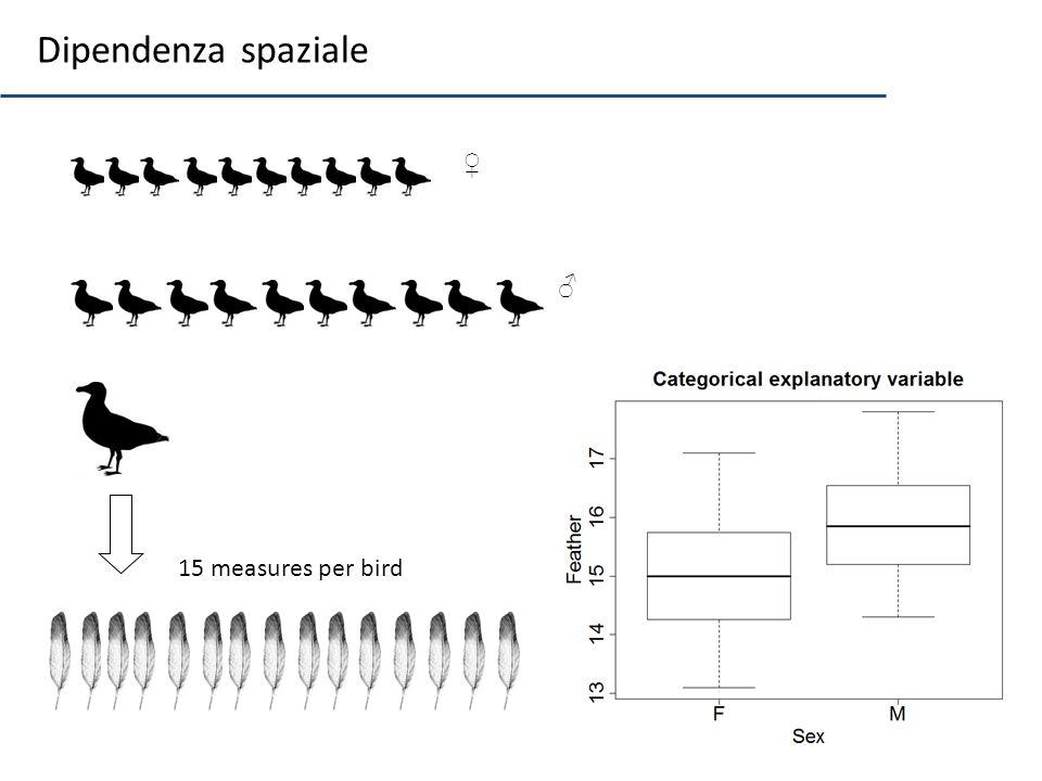 10 15 measures per bird Dipendenza spaziale