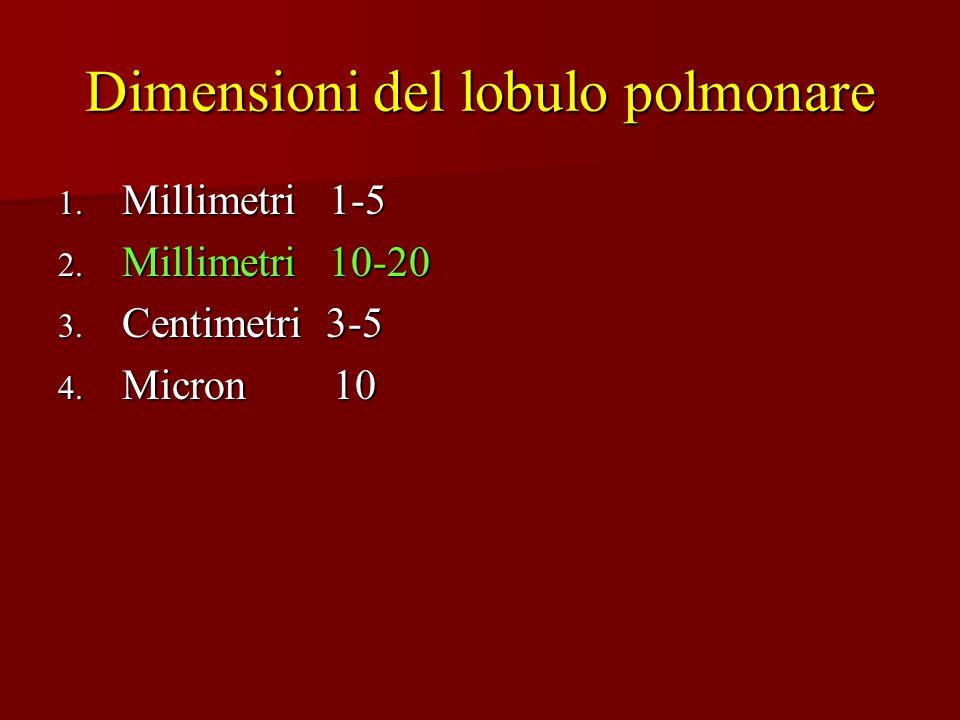 Dimensioni del lobulo polmonare 1. Millimetri 1-5 2. Millimetri 10-20 3. Centimetri 3-5 4. Micron 10
