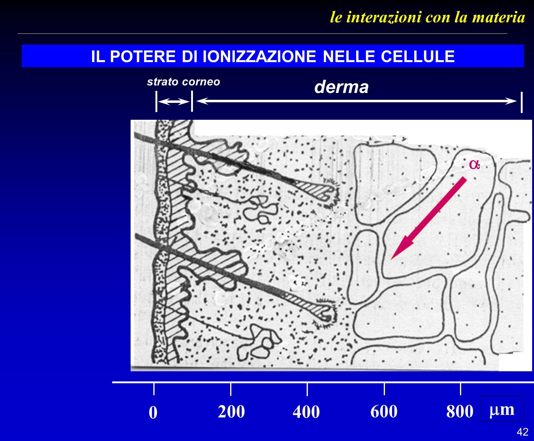 42 le interazioni con la materia IL POTERE DI IONIZZAZIONE NELLE CELLULE 0 200 400 600800 m derma strato corneo