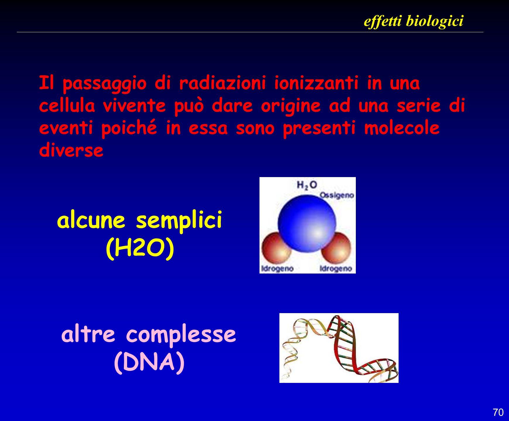70 effetti biologici Il passaggio di radiazioni ionizzanti in una cellula vivente può dare origine ad una serie di eventi poiché in essa sono presenti