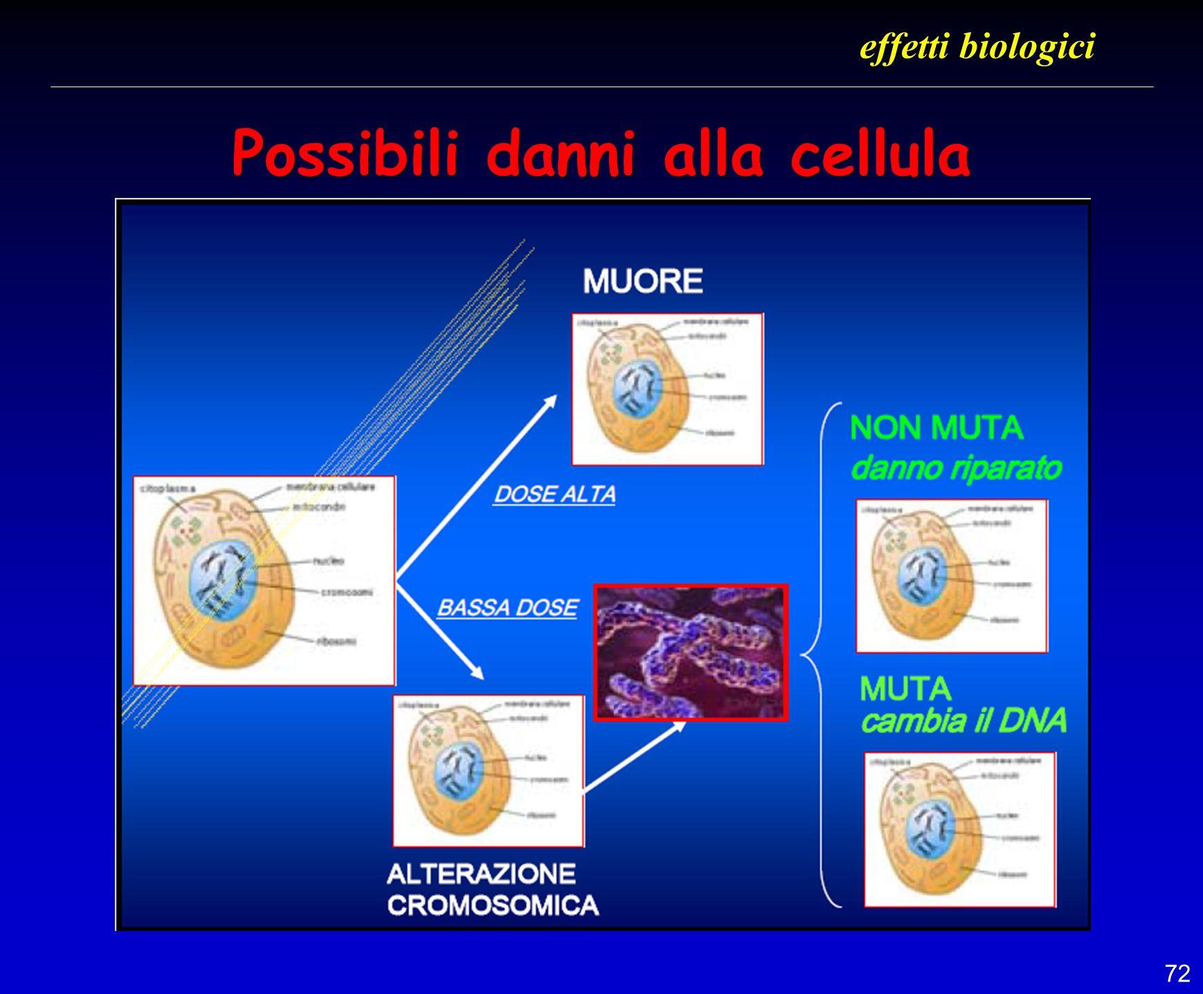 72 Possibili danni alla cellula effetti biologici
