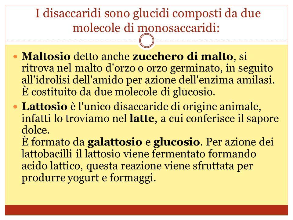 I disaccaridi sono glucidi composti da due molecole di monosaccaridi: Maltosio detto anche zucchero di malto, si ritrova nel malto d orzo o orzo germinato, in seguito all idrolisi dell amido per azione dell enzima amilasi.