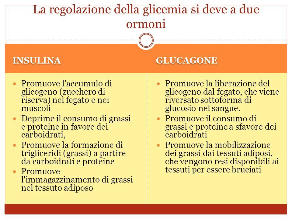INSULINA GLUCAGONE Promuove l accumulo di glicogeno (zucchero di riserva) nel fegato e nei muscoli Deprime il consumo di grassi e proteine in favore dei carboidrati, Promuove la formazione di trigliceridi (grassi) a partire da carboidrati e proteine Promuove l immagazzinamento di grassi nel tessuto adiposo Promuove la liberazione del glicogeno dal fegato, che viene riversato sottoforma di glucosio nel sangue.