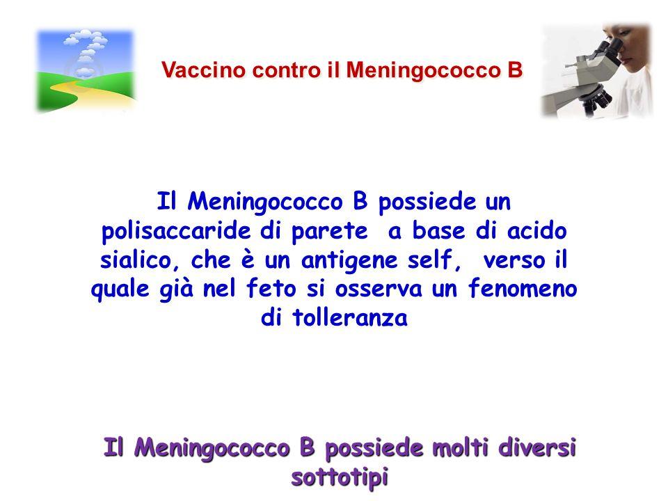 Vaccino contro il Meningococco B Il Meningococco B possiede un polisaccaride di parete a base di acido sialico, che è un antigene self, verso il quale