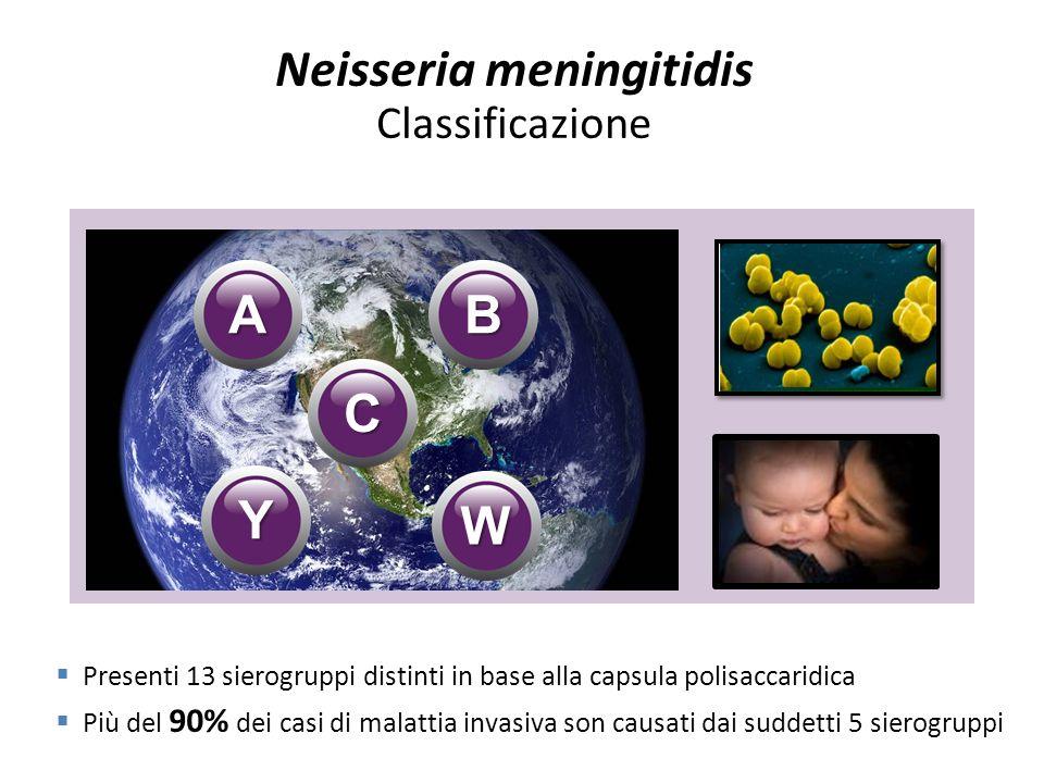 A B C W Y Presenti 13 sierogruppi distinti in base alla capsula polisaccaridica Più del 90% dei casi di malattia invasiva son causati dai suddetti 5 s