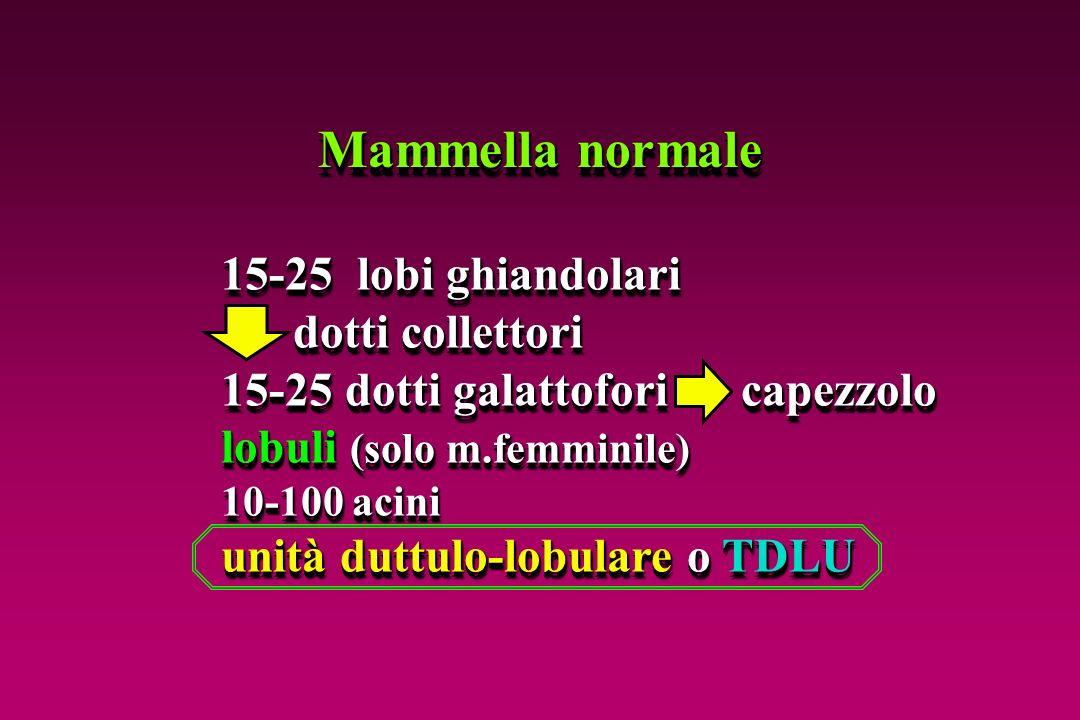 Mammella normale 15-25 lobi ghiandolari dotti collettori dotti collettori 15-25 dotti galattofori capezzolo lobuli (solo m.femminile) 10-100 acini uni