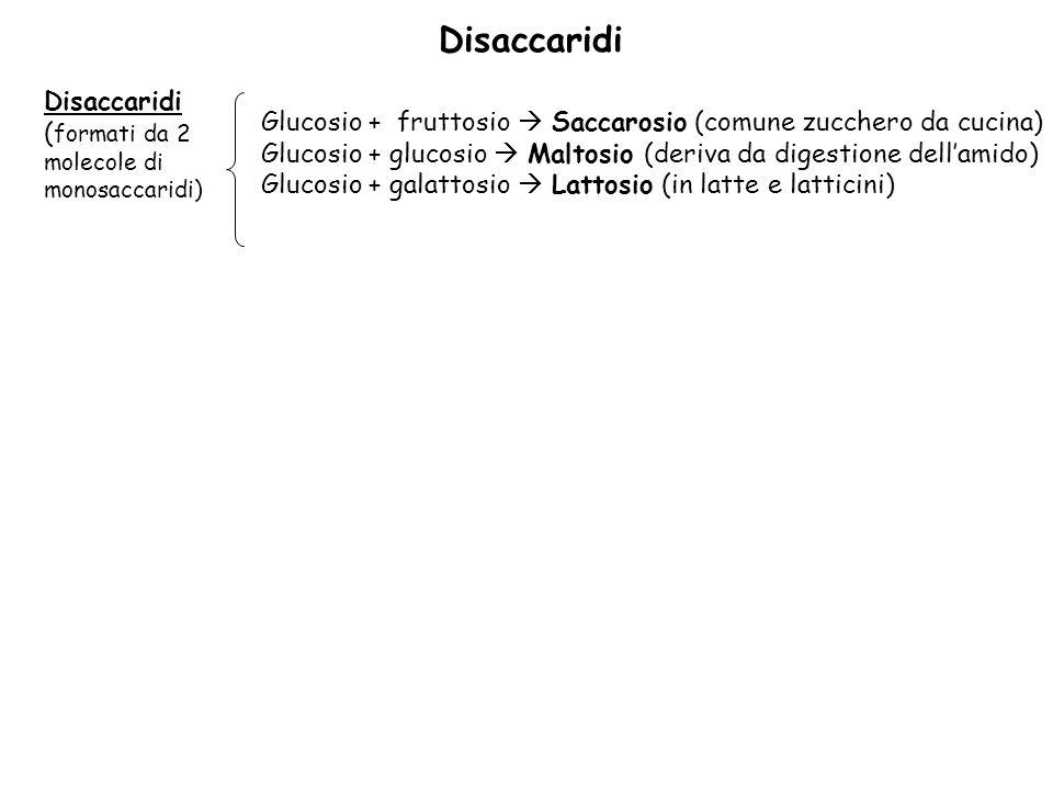 Disaccaridi ( formati da 2 molecole di monosaccaridi) Glucosio + fruttosio Saccarosio (comune zucchero da cucina) Glucosio + glucosio Maltosio (deriva da digestione dellamido) Glucosio + galattosio Lattosio (in latte e latticini)