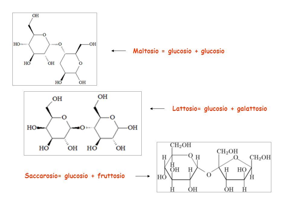 Maltosio = glucosio + glucosio Lattosio= glucosio + galattosio Saccarosio= glucosio + fruttosio