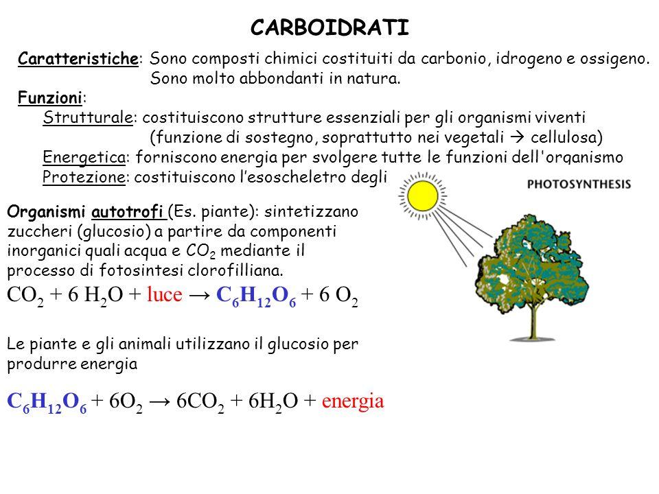 Caratteristiche: Sono composti chimici costituiti da carbonio, idrogeno e ossigeno.