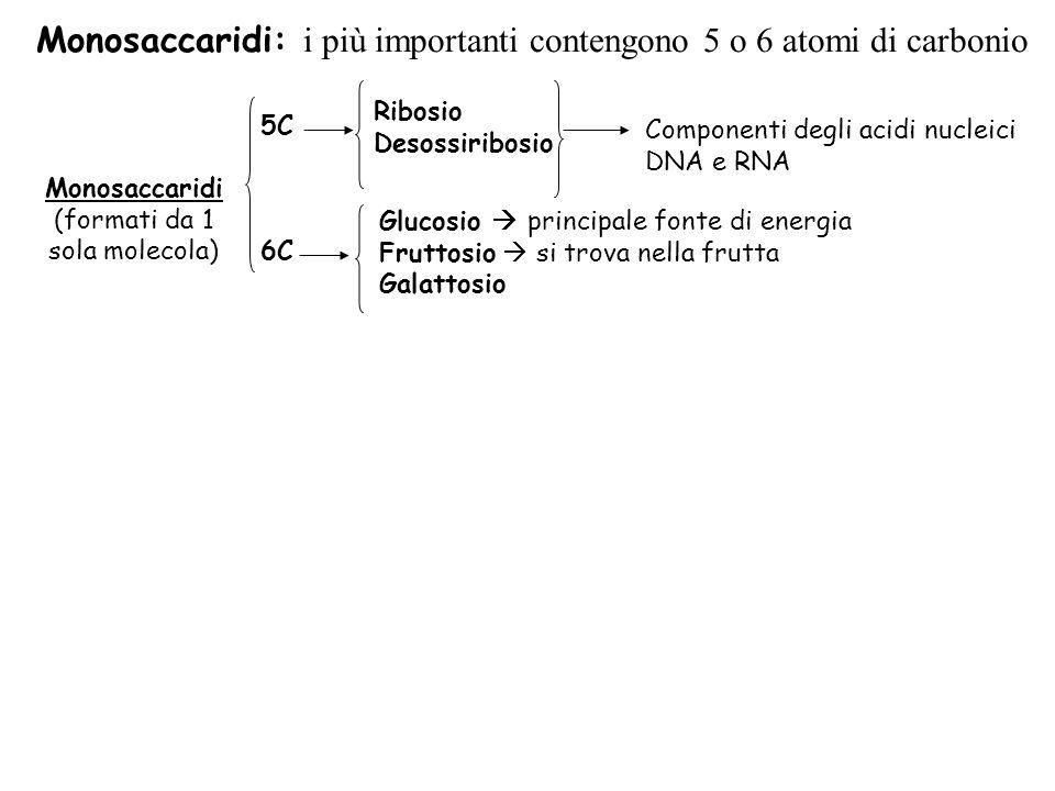 Monosaccaridi: i più importanti contengono 5 o 6 atomi di carbonio Monosaccaridi (formati da 1 sola molecola) 5C Ribosio Desossiribosio Componenti degli acidi nucleici DNA e RNA Glucosio principale fonte di energia Fruttosio si trova nella frutta Galattosio 6C