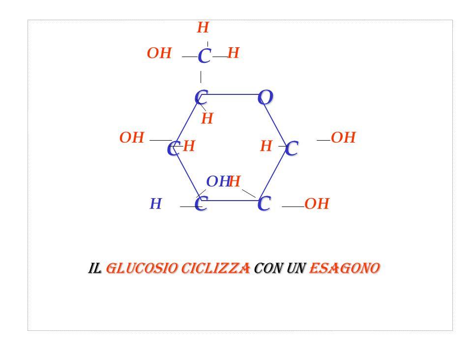 CCOC CC C H H OH H H H H H Il glucosio ciclizza con un esagono