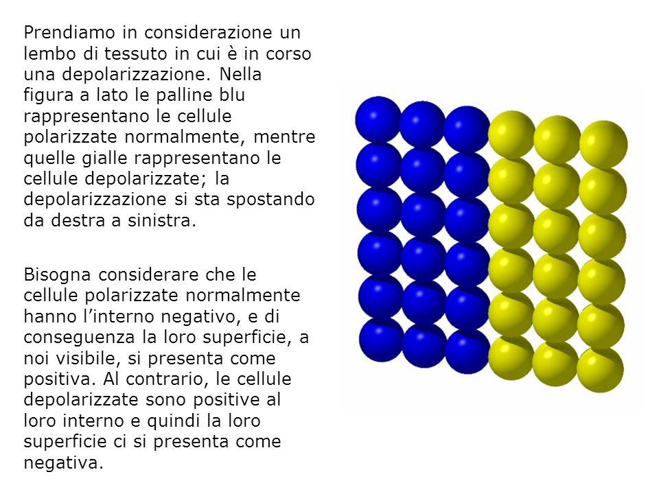 Prendiamo in considerazione un lembo di tessuto in cui è in corso una depolarizzazione. Nella figura a lato le palline blu rappresentano le cellule po