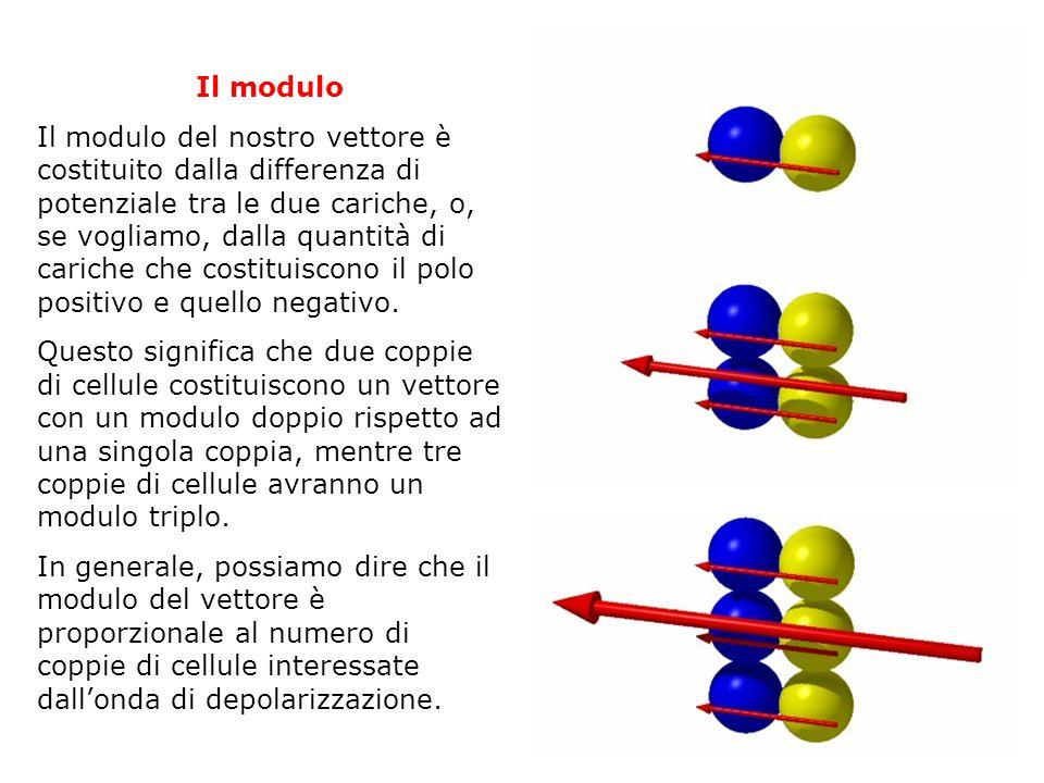 Il modulo Il modulo del nostro vettore è costituito dalla differenza di potenziale tra le due cariche, o, se vogliamo, dalla quantità di cariche che c