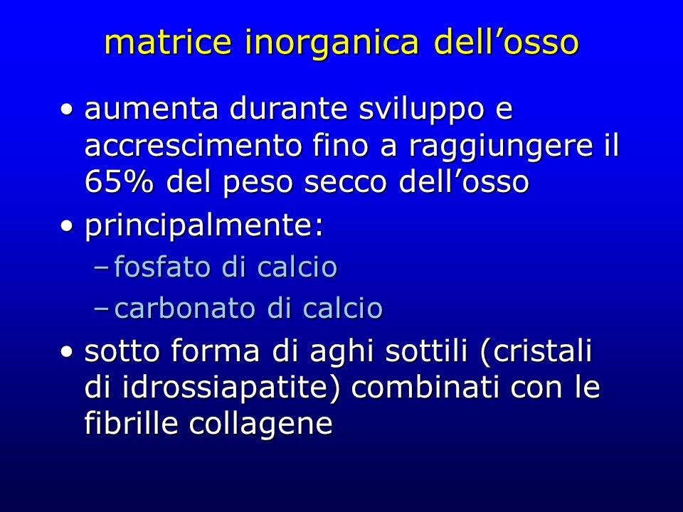 matrice inorganica dellosso aumenta durante sviluppo e accrescimento fino a raggiungere il 65% del peso secco dellossoaumenta durante sviluppo e accre
