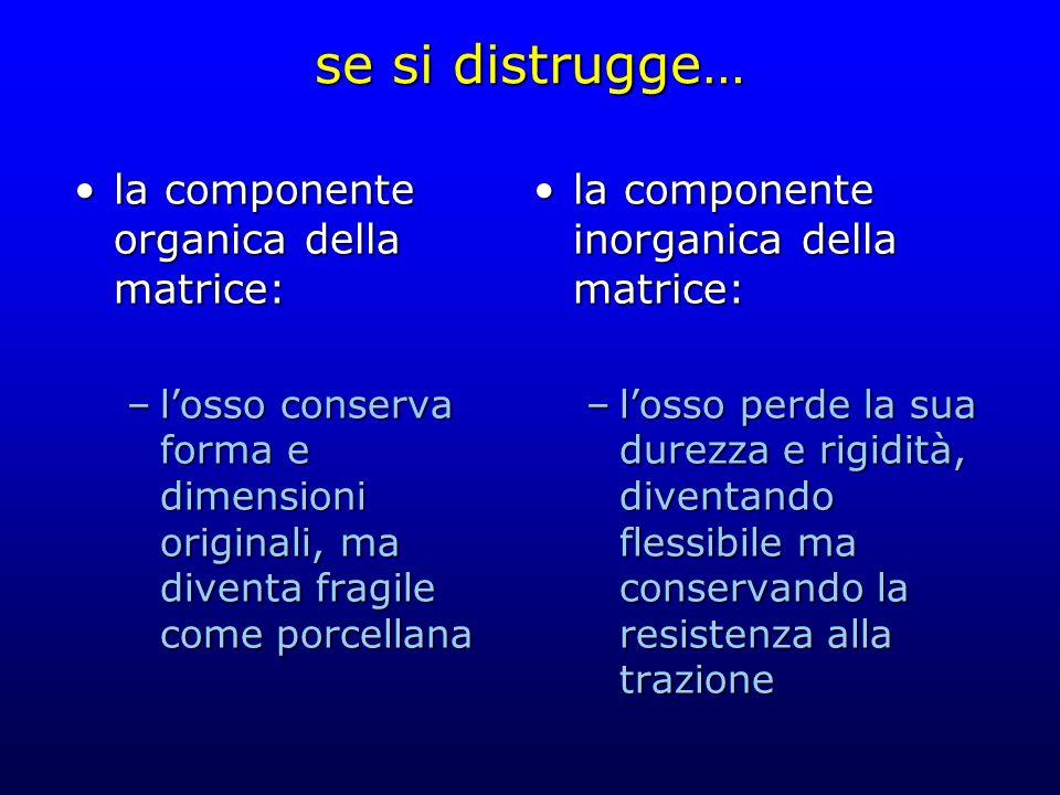 se si distrugge… la componente organica della matrice:la componente organica della matrice: –losso conserva forma e dimensioni originali, ma diventa f