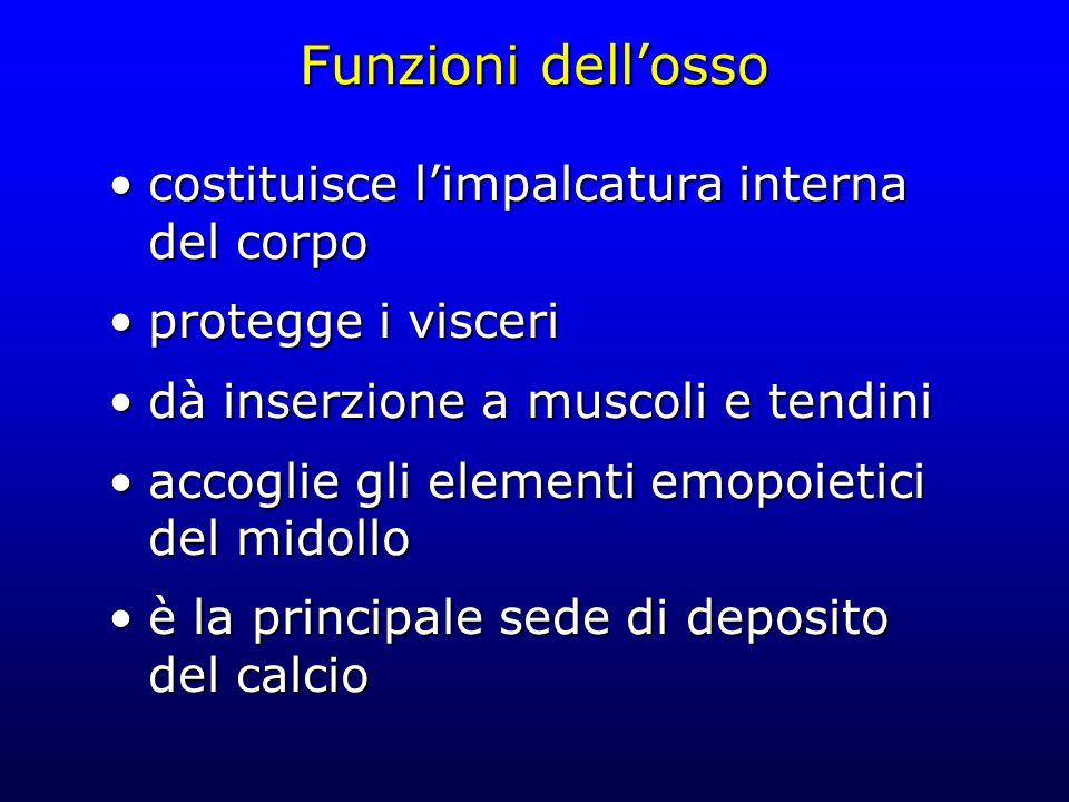 Funzioni dellosso costituisce limpalcatura interna del corpocostituisce limpalcatura interna del corpo protegge i visceriprotegge i visceri dà inserzi