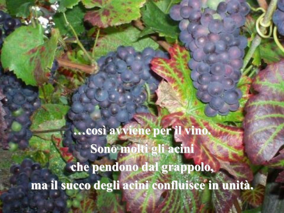 …così avviene per il vino. Sono molti gli acini che pendono dal grappolo, ma il succo degli acini confluisce in unità.
