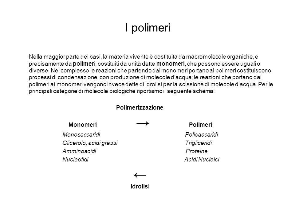 I polimeri Nella maggior parte dei casi, la materia vivente è costituita da macromolecole organiche, e precisamente da polimeri, costituiti da unità d