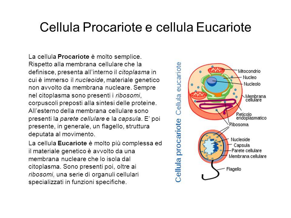 Cellula Procariote e cellula Eucariote La cellula Procariote è molto semplice. Rispetto alla membrana cellulare che la definisce, presenta allinterno