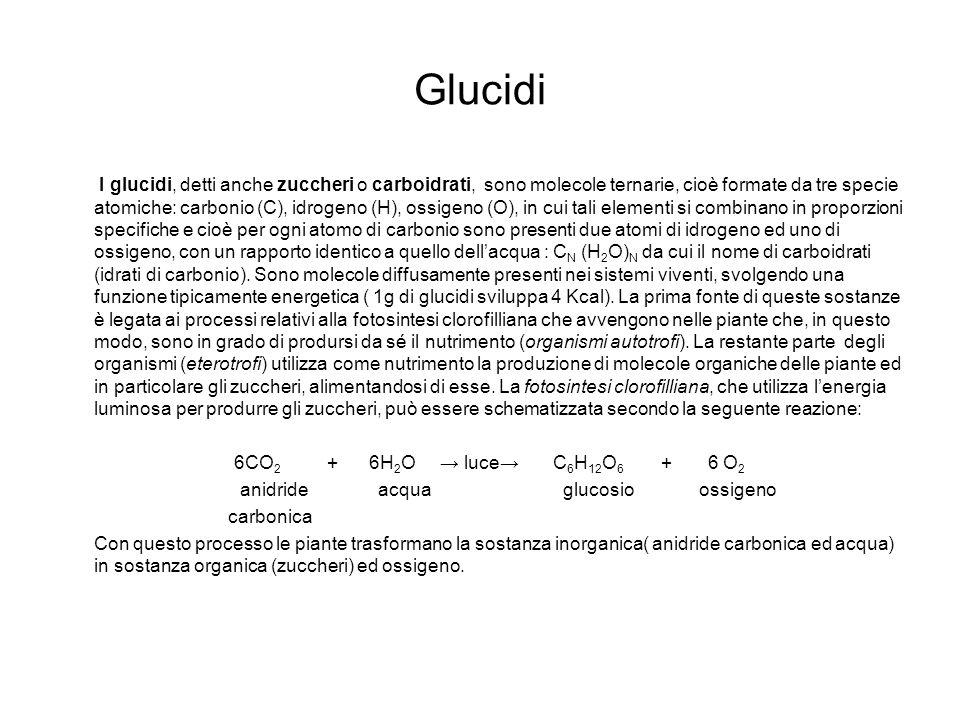 Glucidi I glucidi, detti anche zuccheri o carboidrati, sono molecole ternarie, cioè formate da tre specie atomiche: carbonio (C), idrogeno (H), ossige