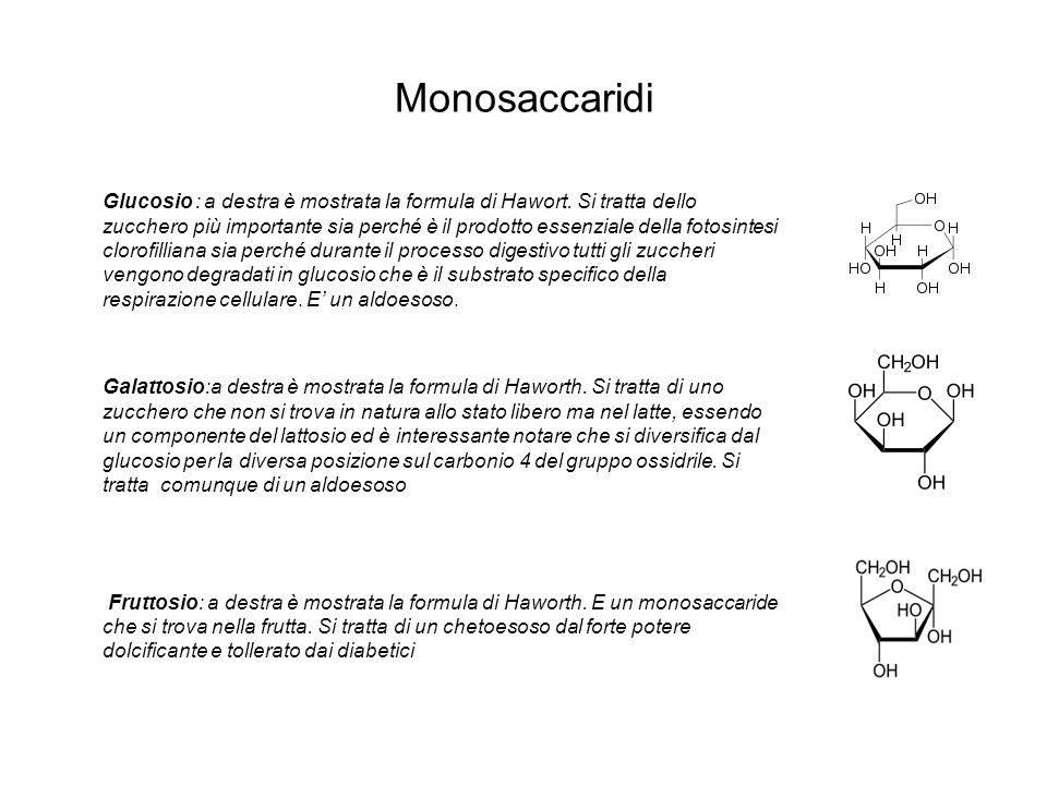 Monosaccaridi Glucosio : a destra è mostrata la formula di Hawort. Si tratta dello zucchero più importante sia perché è il prodotto essenziale della f