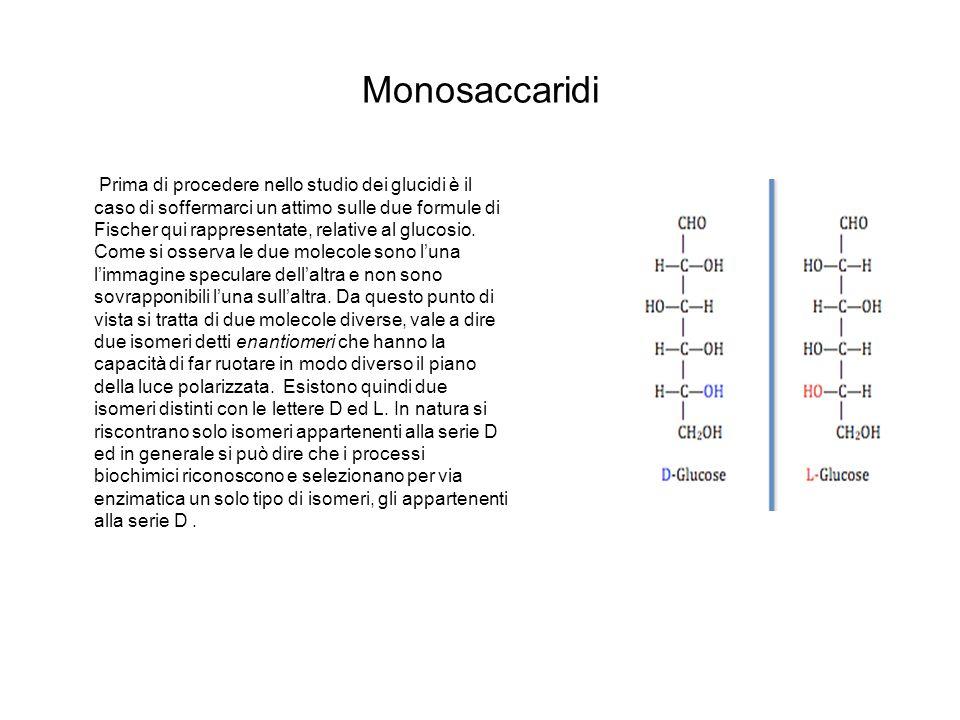 Monosaccaridi Prima di procedere nello studio dei glucidi è il caso di soffermarci un attimo sulle due formule di Fischer qui rappresentate, relative
