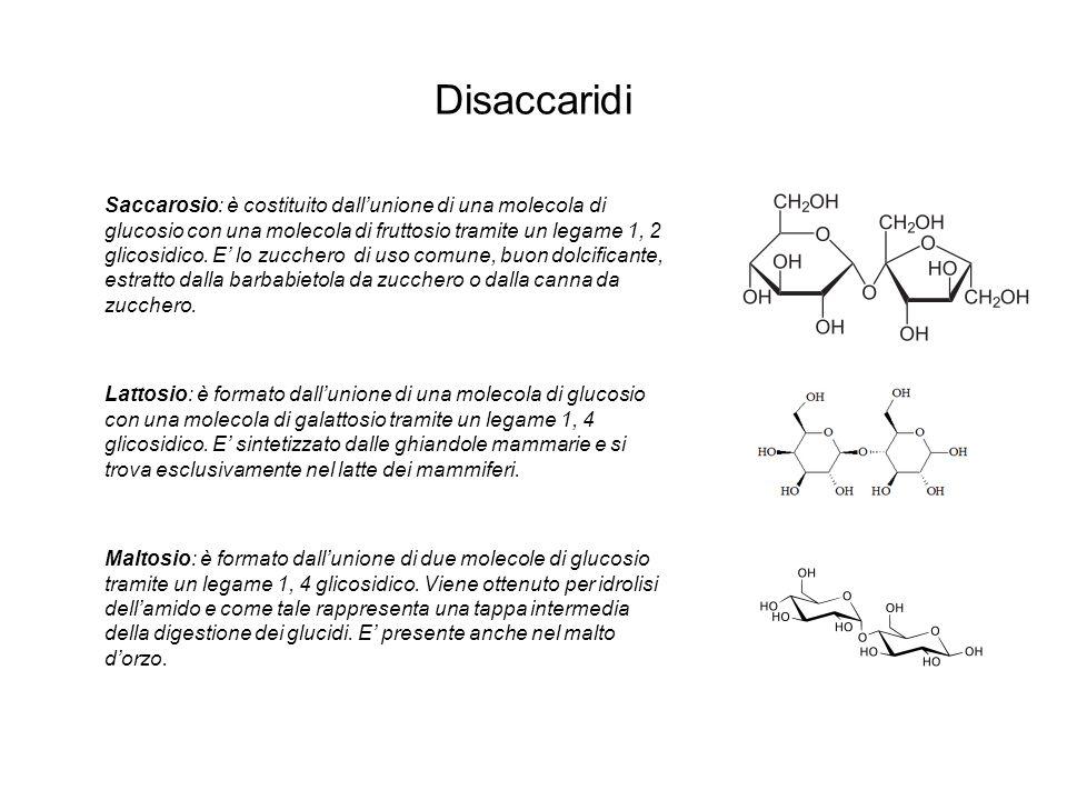 Disaccaridi Saccarosio: è costituito dallunione di una molecola di glucosio con una molecola di fruttosio tramite un legame 1, 2 glicosidico. E lo zuc