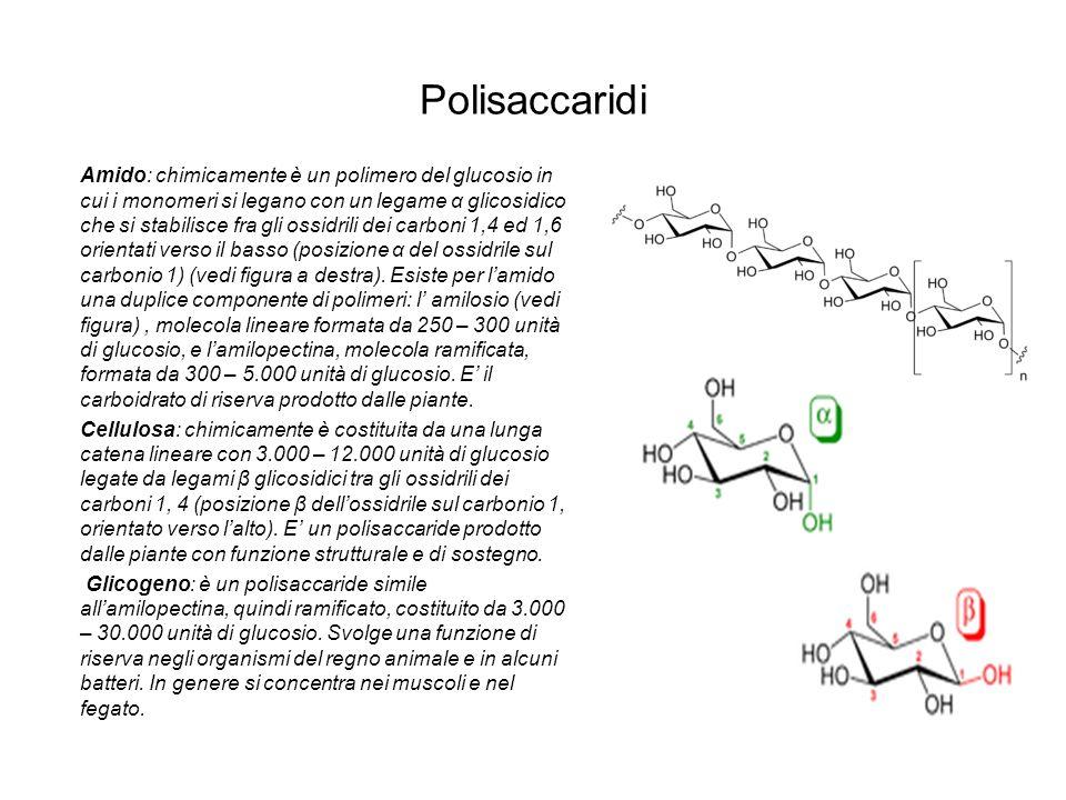 Polisaccaridi Amido: chimicamente è un polimero del glucosio in cui i monomeri si legano con un legame α glicosidico che si stabilisce fra gli ossidri