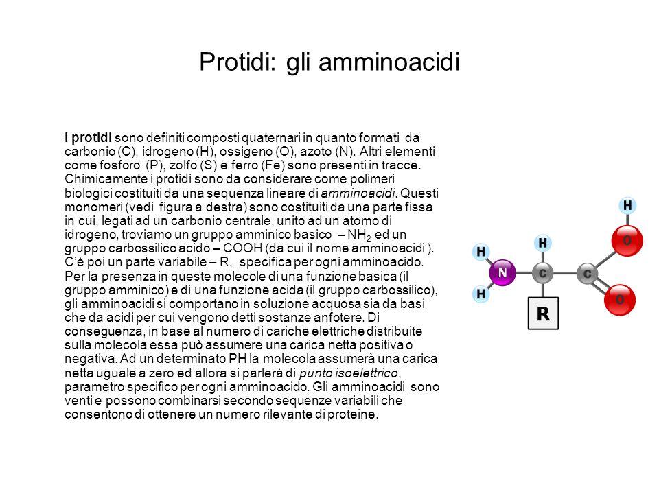 Protidi: gli amminoacidi I protidi sono definiti composti quaternari in quanto formati da carbonio (C), idrogeno (H), ossigeno (O), azoto (N). Altri e