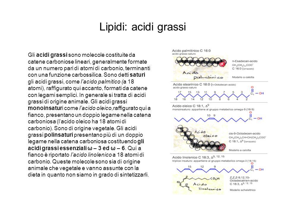 Lipidi: acidi grassi Gli acidi grassi sono molecole costituite da catene carboniose lineari, generalmente formate da un numero pari di atomi di carbon