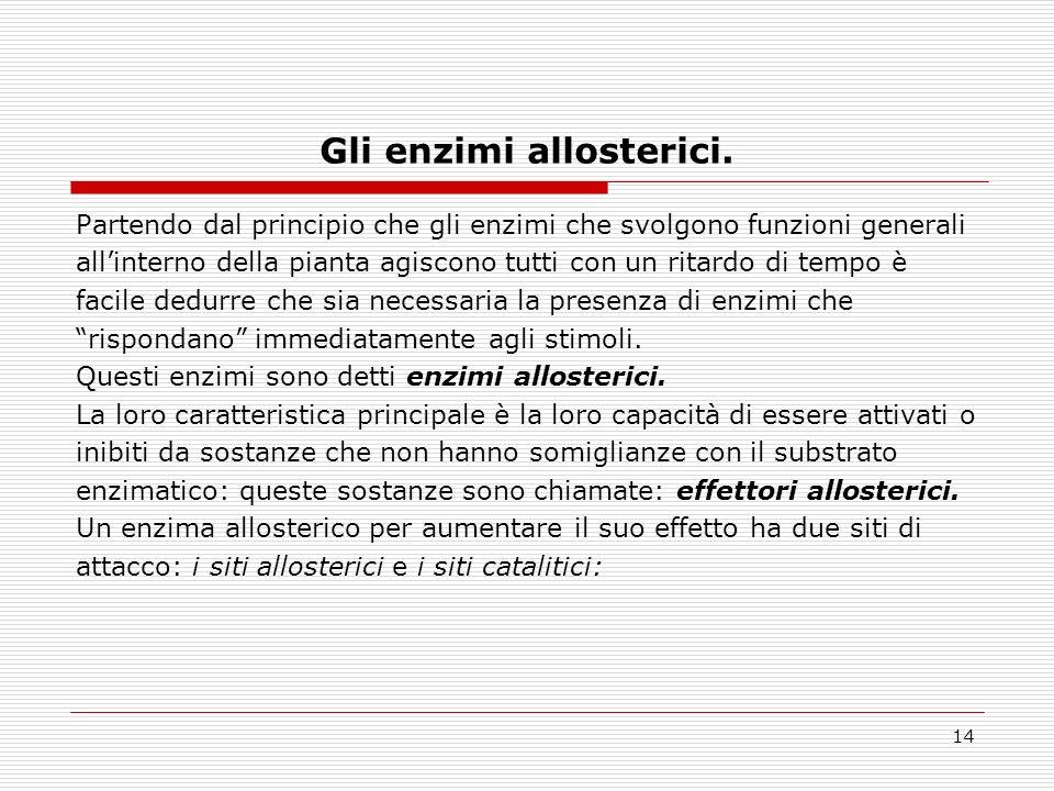 14 Gli enzimi allosterici.