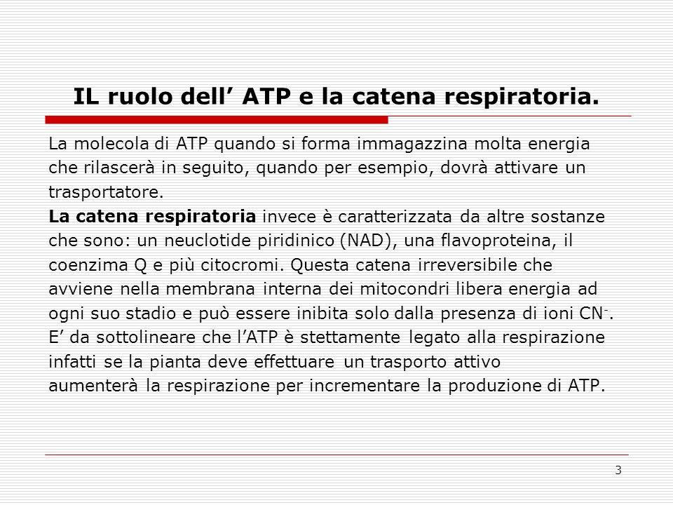 3 IL ruolo dell ATP e la catena respiratoria.