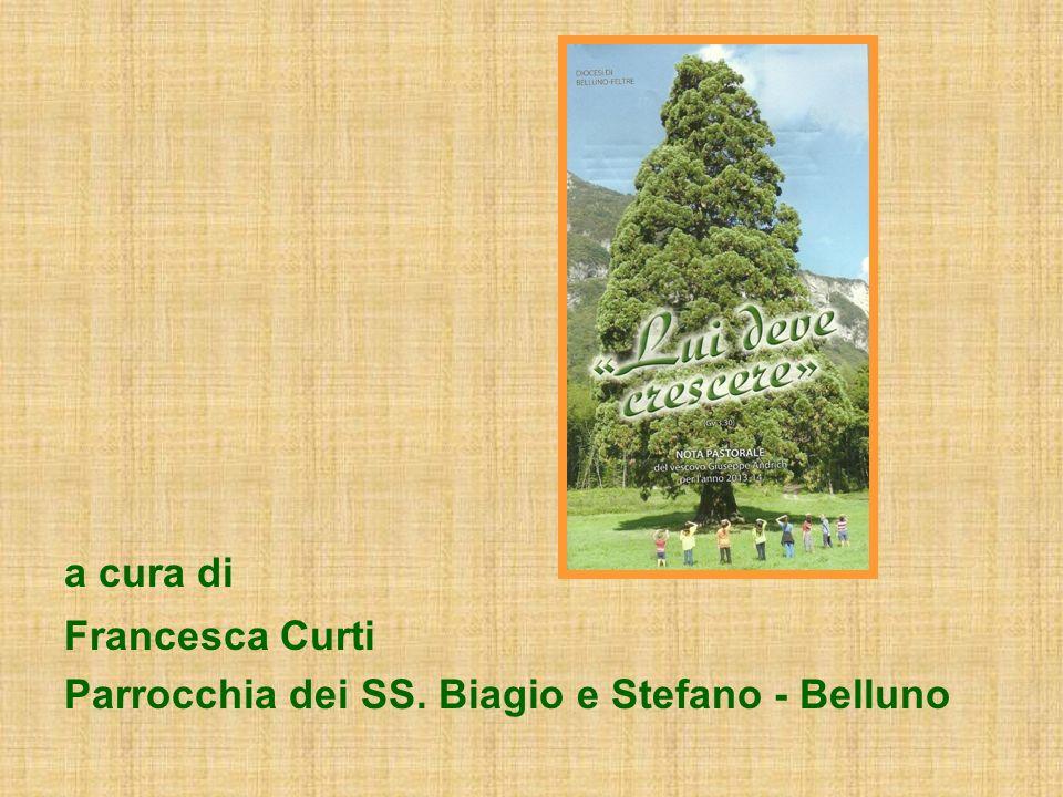 a cura di Francesca Curti Parrocchia dei SS. Biagio e Stefano - Belluno