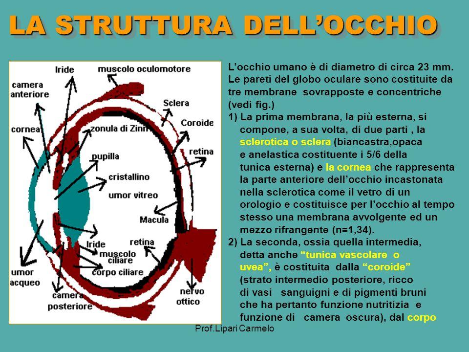Prof.Lipari Carmelo LA STRUTTURA DELLOCCHIO Locchio umano è di diametro di circa 23 mm.