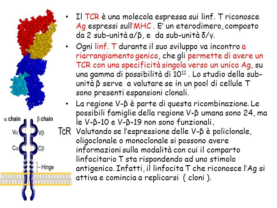 Il TCR è una molecola espressa sui linf. T riconosce Ag espressi sullMHC. E un eterodimero, composto da 2 sub-unità α/β, e da sub-unità δ/γ. Ogni linf
