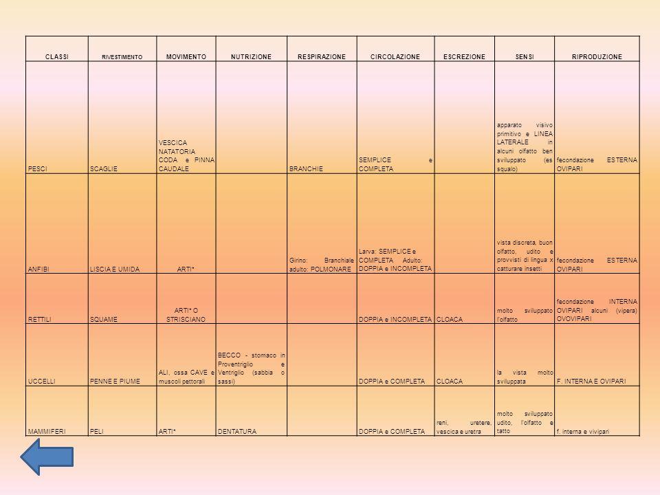CLASSI RIVESTIMENTO MOVIMENTONUTRIZIONERESPIRAZIONECIRCOLAZIONEESCREZIONESENSIRIPRODUZIONE PESCISCAGLIE VESCICA NATATORIA CODA e PINNA CAUDALE BRANCHIE SEMPLICE e COMPLETA apparato visivo primitivo e LINEA LATERALE in alcuni olfatto ben sviluppato (es squalo) fecondazione ESTERNA OVIPARI ANFIBILISCIA E UMIDAARTI* Girino: Branchiale adulto: POLMONARE Larva: SEMPLICE e COMPLETA Adulto: DOPPIA e INCOMPLETA vista discreta, buon olfatto, udito e provvisti di lingua x catturare insetti fecondazione ESTERNA OVIPARI RETTILISQUAME ARTI* O STRISCIANO DOPPIA e INCOMPLETACLOACA molto sviluppato l olfatto fecondazione INTERNA OVIPARI alcuni (vipera) OVOVIPARI UCCELLIPENNE E PIUME ALI, ossa CAVE e muscoli pettorali BECCO - stomaco in Proventriglio e Ventriglio (sabbia o sassi) DOPPIA e COMPLETACLOACA la vista molto sviluppataF.
