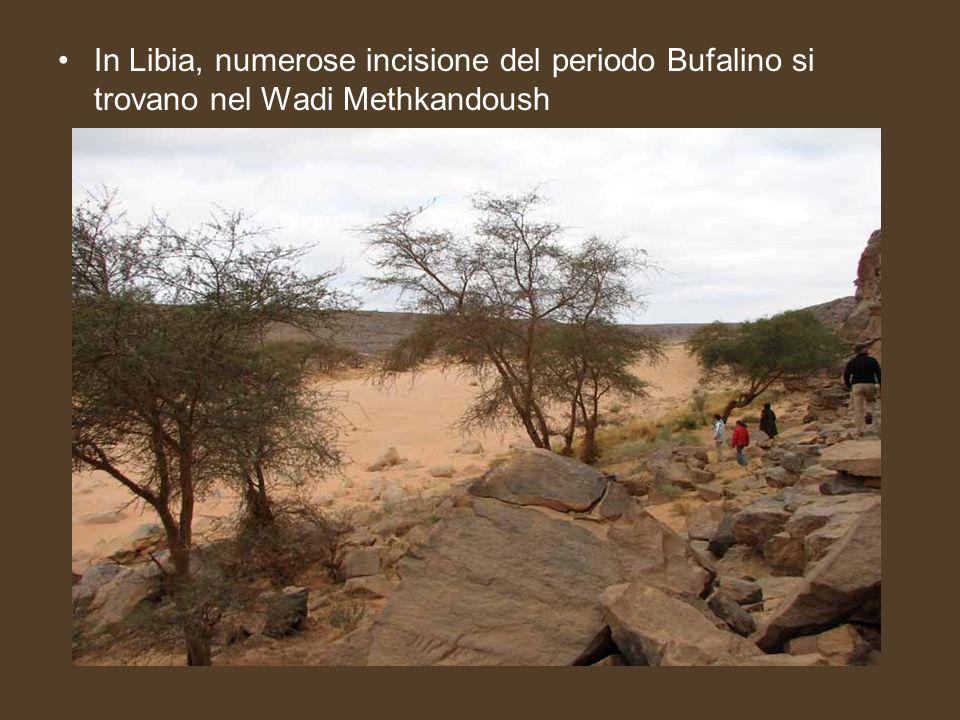 In Libia, numerose incisione del periodo Bufalino si trovano nel Wadi Methkandoush