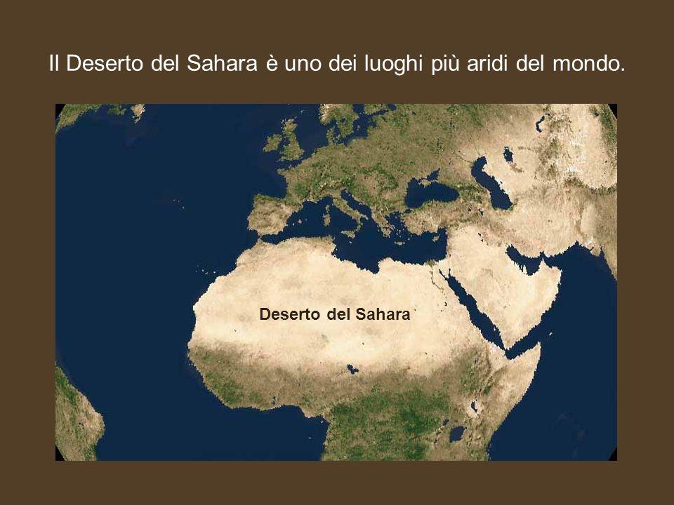 Il Deserto del Sahara è uno dei luoghi più aridi del mondo. Deserto del Sahara
