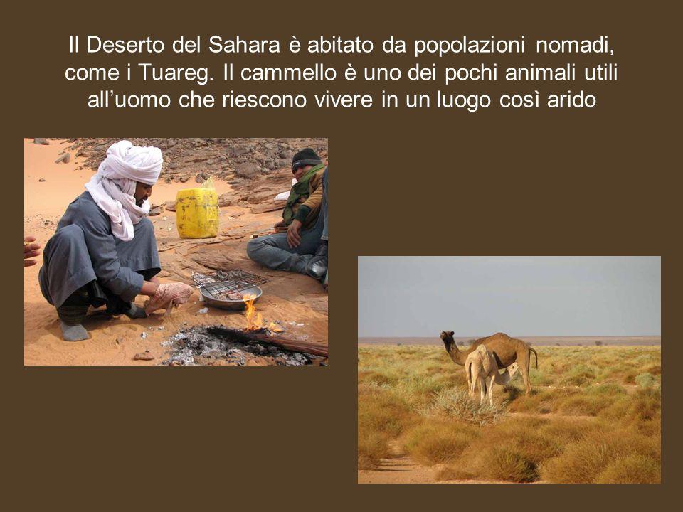 Il Deserto del Sahara è abitato da popolazioni nomadi, come i Tuareg. Il cammello è uno dei pochi animali utili alluomo che riescono vivere in un luog