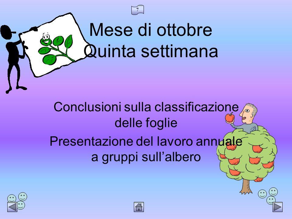 7 Mese di ottobre Quinta settimana Conclusioni sulla classificazione delle foglie Presentazione del lavoro annuale a gruppi sullalbero