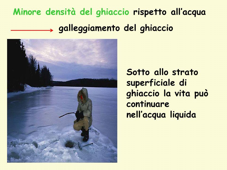 Minore densità del ghiaccio rispetto allacqua galleggiamento del ghiaccio Sotto allo strato superficiale di ghiaccio la vita può continuare nellacqua