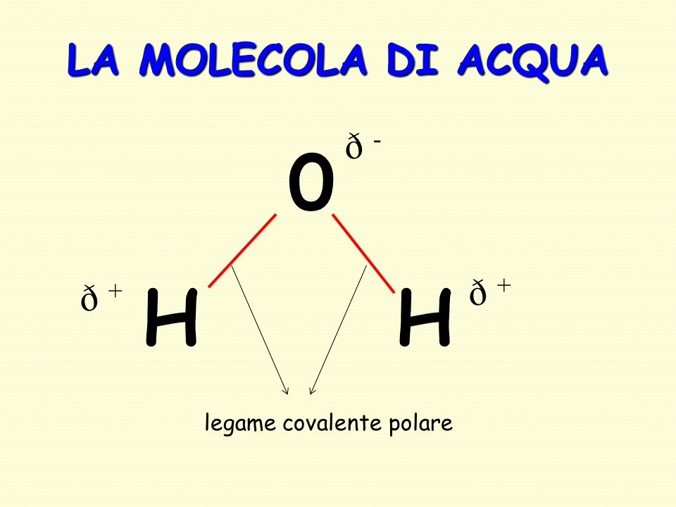 LA MOLECOLA DI ACQUA 0 H legame covalente polare ð -ð - ð +ð + ð +ð +