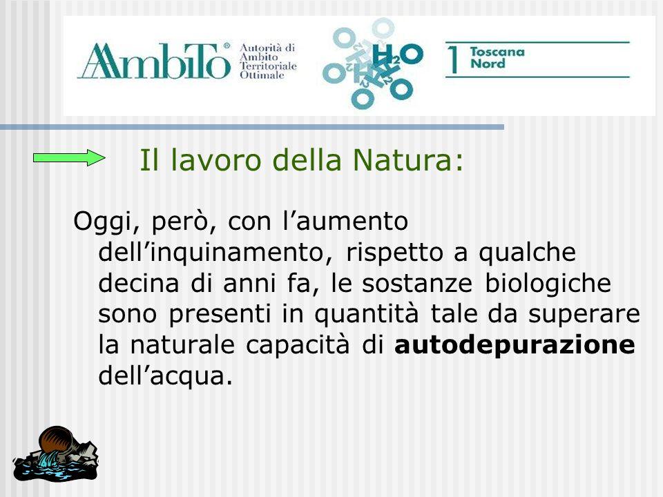 Il lavoro della Natura: Oggi, però, con laumento dellinquinamento, rispetto a qualche decina di anni fa, le sostanze biologiche sono presenti in quant