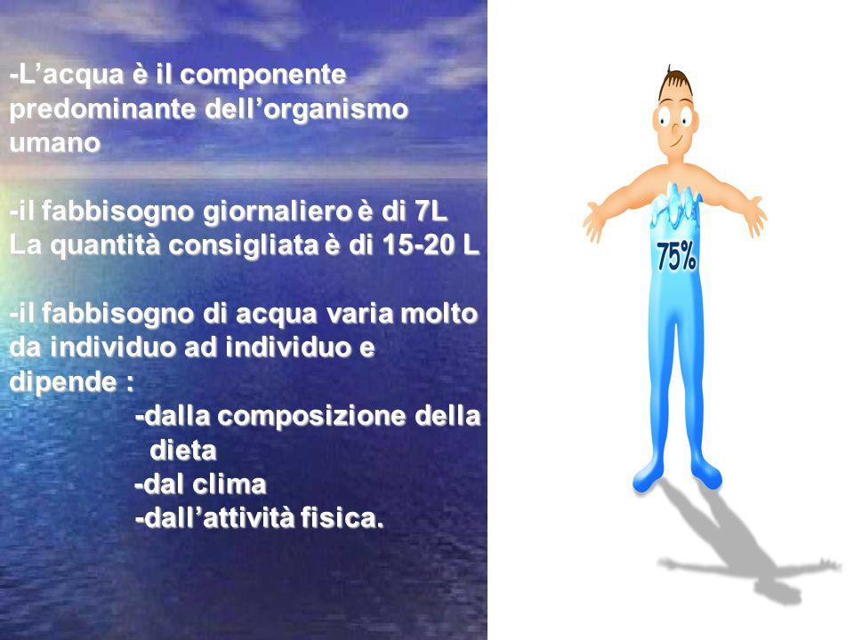 -Lacqua è il componente predominante dellorganismo umano -il fabbisogno giornaliero è di 7L La quantità consigliata è di 15-20 L -il fabbisogno di acq