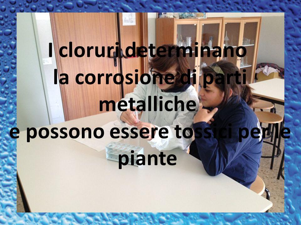 I cloruri determinano la corrosione di parti metalliche e possono essere tossici per le piante