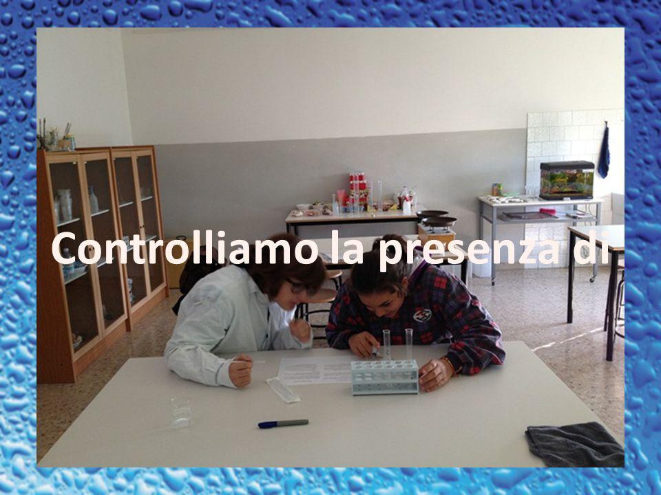IL NOSTRO GRUPPO Progettato da : Sara Brighenti, Chiara Furlani, Angeles Rossi e Francesca Carolo.
