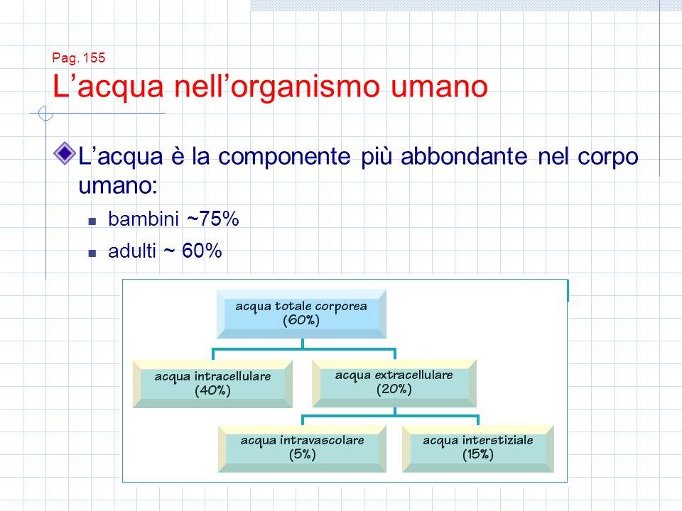 Pag. 155 Lacqua nellorganismo umano Lacqua è la componente più abbondante nel corpo umano: bambini ~75% adulti ~ 60%