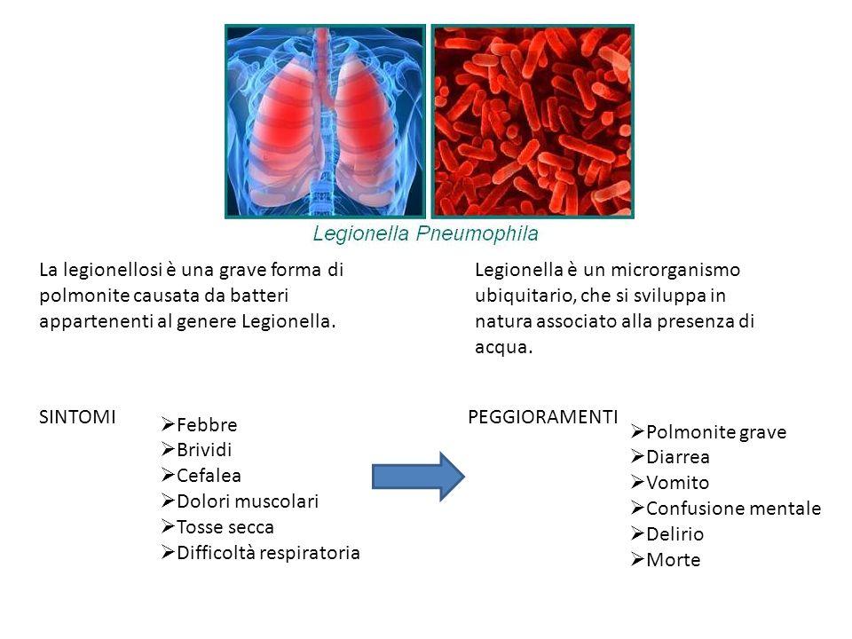 La legionellosi è una grave forma di polmonite causata da batteri appartenenti al genere Legionella. Legionella è un microrganismo ubiquitario, che si
